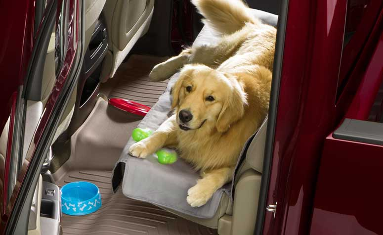 Seat protection from Pets